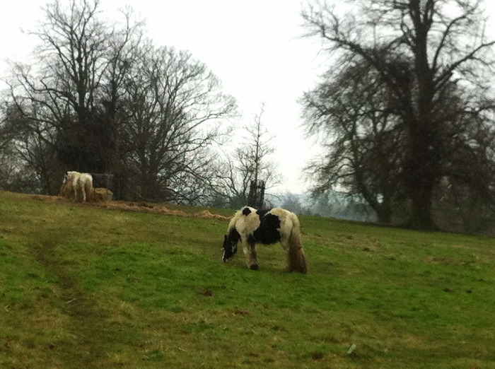 Horses in Cherry Hill Park