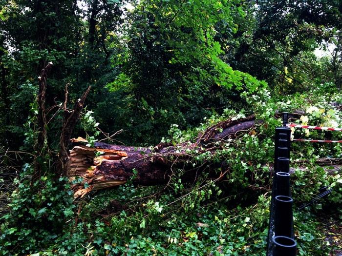 OTH Fallen Tree