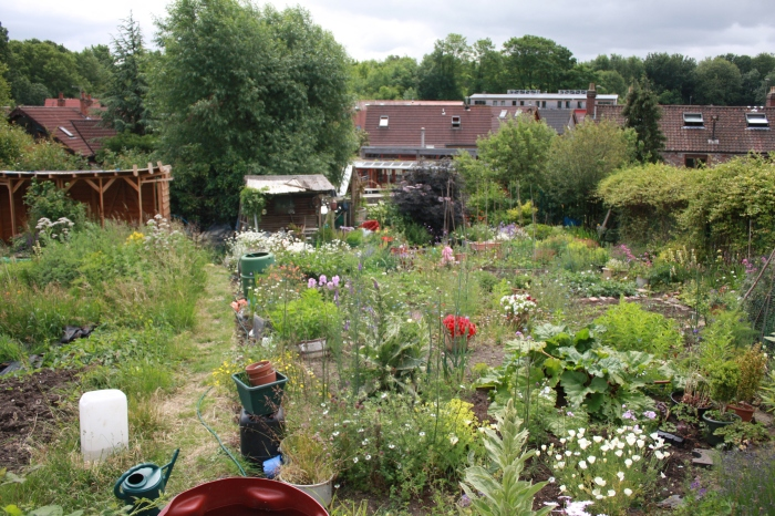 ashleyvaleallotments