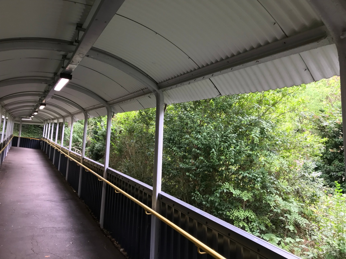 At the tree border: Sydenham Hill Station